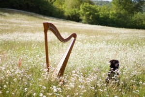 Harp & Pets